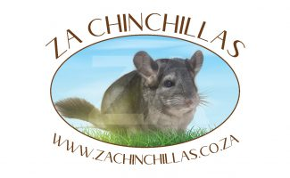 logoZAchinchillas